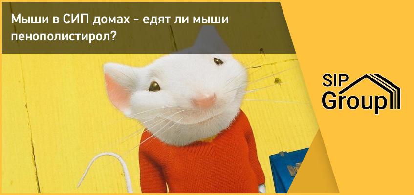 Мыши в СИП домах - едят ли мыши пенополистирол?